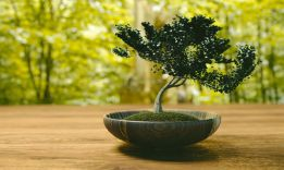 How to Make a Bonsai Tree: Detailed Guidance