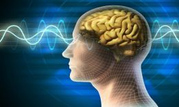 How to increase intelligence: effective methods