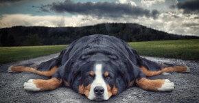how-to-combat-laziness