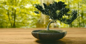 how-to-make-a-bonsai-tree